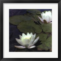 Framed Water Lillies I