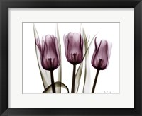 Framed Trio of Tulips I