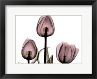 Framed Trio of Tulips II