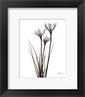 Blue Floral X-ray Rain Lily Framed Print