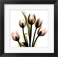 Framed Crystal Flowers X-Ray, Tulip Bouquet