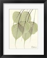 Cascading Bo Tree Framed Print