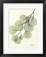 Framed Cascading Eucalyptus