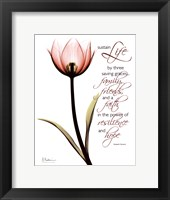Love Tulip Red Framed Print
