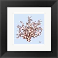 Coral II Framed Print