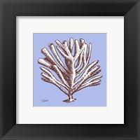 Coral III Framed Print