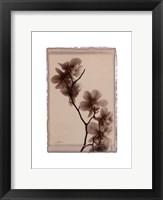 Polaroid Magnolia Framed Print
