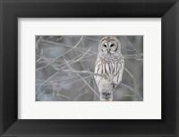 Framed Owl In The Woods