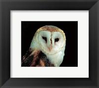 Framed Barn Owl Portrait