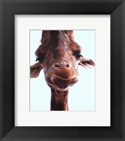 Framed Giraffe Face