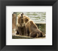 Framed Grizzly Bear Cubs