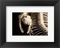 Framed Snake Skeleton
