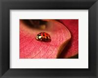 Framed Ladybug On Leaves