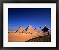 Framed Riding a camel near pyramids, Giza Pyramids, Giza, Egypt