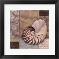 Santa Rosa Shell II Framed Print