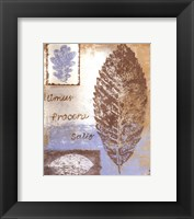 Framed Leaf III