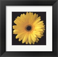 Framed Gerbera Daisy Yellow
