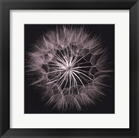 Framed Goat's Beard V