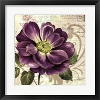 Framed Study in Purple I