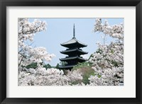 Framed Cherry Blossoms Ninna-Ji Temple Grounds Kyoto Japan