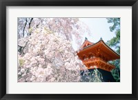 Framed Cherry Blossom tree in front of a temple, Kyoto, Honshu, Japan