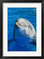Framed Dolphin - in the water
