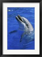 Framed Dolphin Sea World San Diego California USA