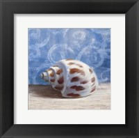 Gifts from the Sea II Framed Print