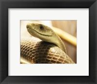 Framed Black Mamba