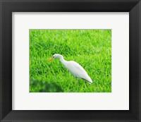Framed Egret In Field