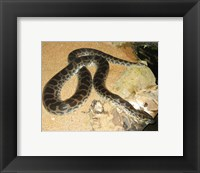 Framed Green Anaconda