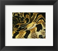 Framed Timber Rattlesnake