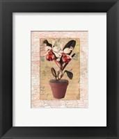 Framed Potted Cattleya