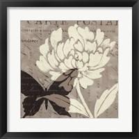 Framed Natural Prints I