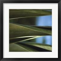 Framed Palma III