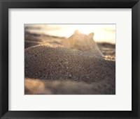 Concha II Framed Print