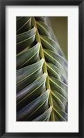 Palma II Framed Print