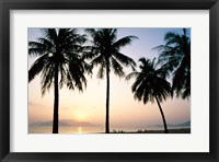 Framed Silhouette of palm trees on a beach during sunrise, Nha Trang Beach, Nha Trang, Vietnam