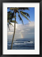 Framed Kauai Hawaii - Palm Tree