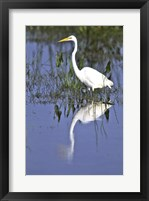 Framed Reflection of a Great Egret in Water