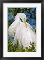 Framed Great Egret - photo