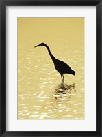 Framed Great Egret in the water