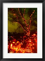 Jack o' lanterns lit up at night, Roger Williams Park Zoo, Providence, Rhode Island, USA Framed Print