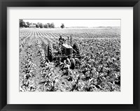 Framed Farmer Driving Tractor in Field