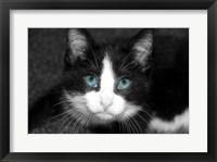 Framed Curiosity Teased the Cat