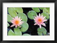 Framed Lotus Eaters II