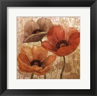 Framed Poppy Allure II
