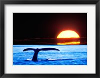 Framed Tail fin of a whale in the sea