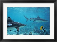 Framed Sharks swimming in the sea