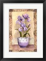 Framed Spring Iris